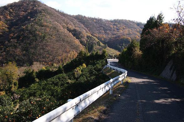 高根島北部の道路