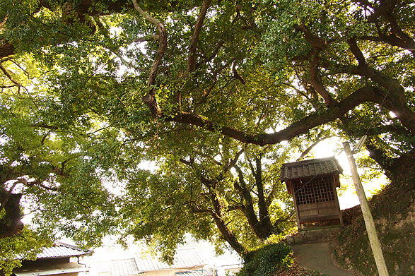 伯方島 三島神社