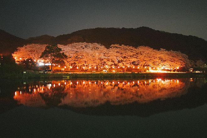 玉川ダムの夜桜